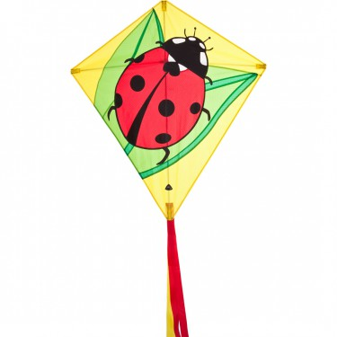 100069_eddy_ladybug